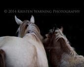 Horse Photo, 8x10 Print, Horses,  Equine Art, Horse Photograph, Rocky Mountain Horses