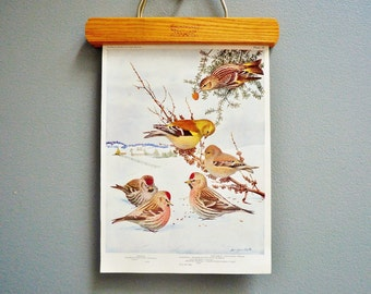 Vintage Winter Birds Book Plate - Redpoll, Goldfinch, and Pine Siskin