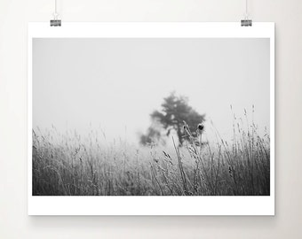 black and white photography, winter, fog, nature photography, tree, grass, tree photograph, still