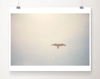 flying bird photograph animal photography flying bird print animal print wings photograph sky photograph flying bird art