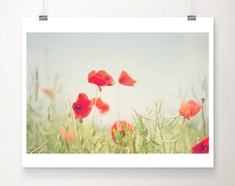 red poppy photograph red flower photograph nature photography english garden print red poppy print summer photograph countryside print