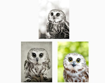Cute Owl Card, blank notecard set, blank greeting cards, Saw Whet Owl photo, owl print, blank notecard set, nature prints Mix & Match