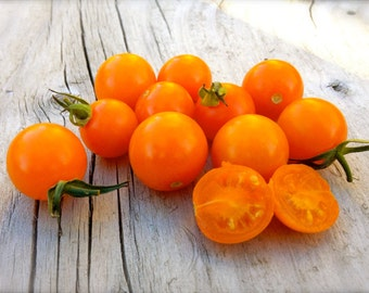 BIG Sungold Select Heirloom Cherry Tomato Seeds Extremely Rare Find