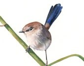 Wren print of watercolor painting - Largest A3 size wall art print - bird art print