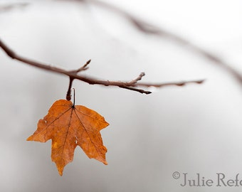 Autumn Fall Photography Leaf Minimalist Photography