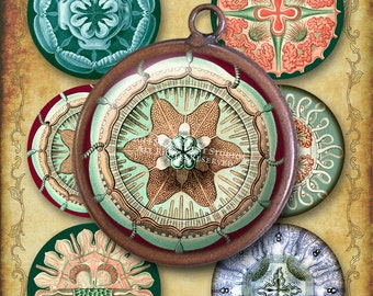 """Victorian Steampunk - Ernst Haeckel - Scrapbooking, Coasters, Ornaments, 3"""" Circles - 2 Digital Collage Sheets, Printables, Instant Download"""