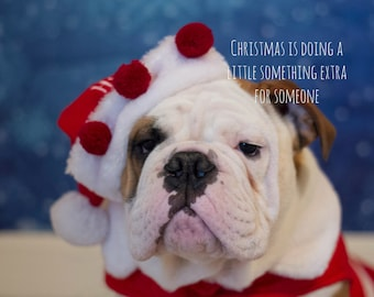 Sweet 5 x 7 English Bulldog Christmas Card