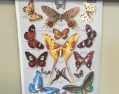 Vintage French Dictionary Page: Butterflies, Papillions, Fish, Poissons on Reverse,1971