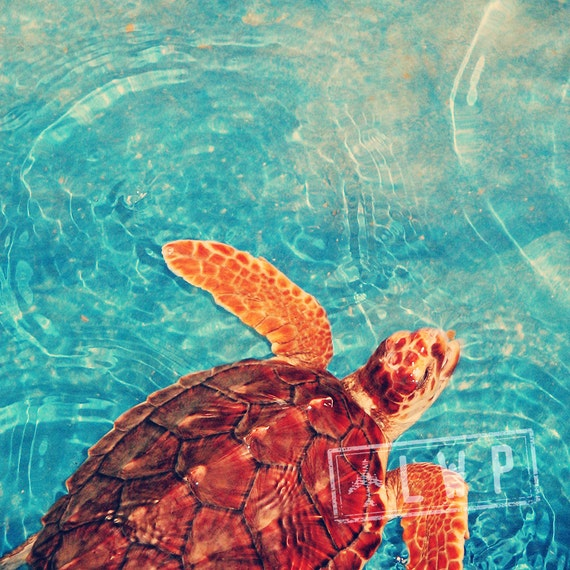 IN STOCK Out For a Swim, Turtle Sanctuary, Animal Child's Room Wall 10x10 Fine Art Photography