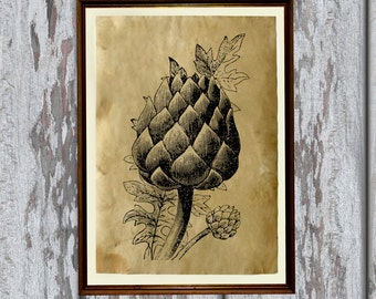 Kitchen decor Artichoke print Designer poster AK352