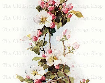 Catherine Klein DOGWOOD Vintage Flower Floral Art Digital Download JPG Image