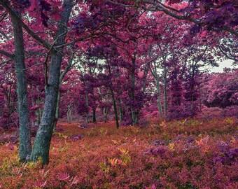 Infrared Raspberry Forest - Fine Art Print