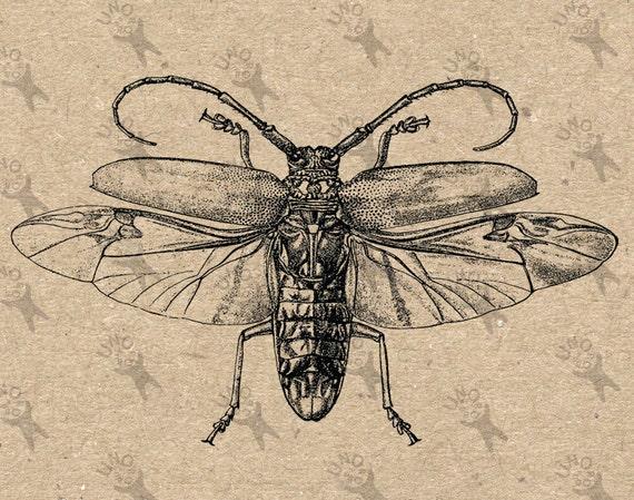 fliegende insekt k fer jahrgang sofortige download digital. Black Bedroom Furniture Sets. Home Design Ideas