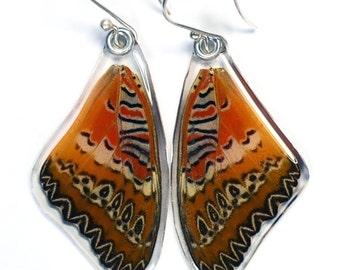 Real Butterfly earrings - Cethosia Biblis Biblis (top/fore wings)