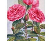 Pink Roses Original Painting Watercolor Floral Wall Art Janet Zeh Matted 8x10