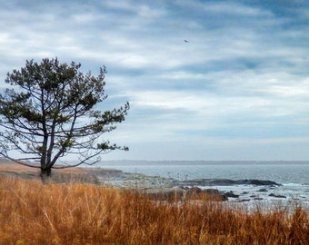 Winter Afternoon on the Sachuest Coast 8 x 12 fine art photo print