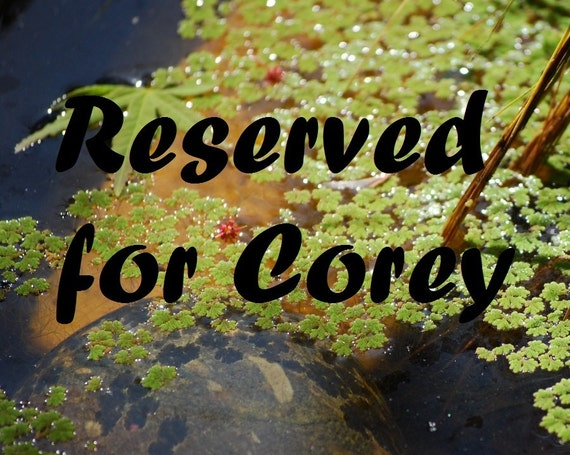 Reserved for Corey