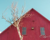 Red Barn, Birch, Nature, landscape photography, fall, autumn, birch tree, fine art, red barn, art, rustic decor, home decor, new england