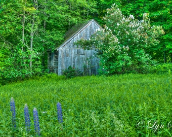Old Barn -  Nature photography, landscape, photography, art, summer, fine art print, barn, New Hampshire, woods, new england
