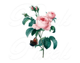 ROSES and butterfly, Instant Download, Vintage Illustration, digital downloads, botanical print, Large Digital Images, roses Redoute 025
