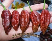 Black Naga super hot pepper seeds