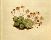 Botanical, Nature print, Nature, Botanical art, Flower print, Wall decor, Nature art, 93