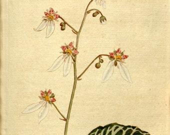 Nature print, Nature, Botanical art, Flower print, Wall decor, Nature art, Botanical, 92