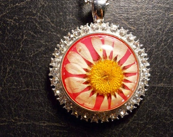 Rhinestone Pink Preserved Daisy Flower Specimen Necklace