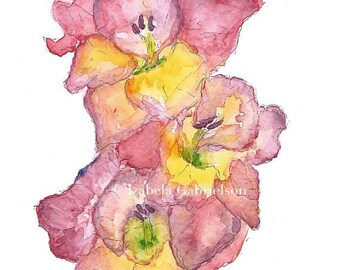 Gladiolus / Sword Lily / Greeting Card / Blank