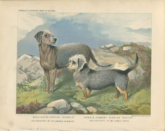Vintage - Vero Shaw - Antique Dog Print - Terriers - Original Chromolithograph  - 1881 Book Of The Dog