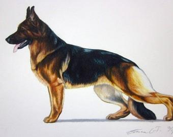 German Shepherd Dog - Archival Quality Fine Art Print - AKC Best in Show Champion - Breed Standard - Herding Group - Original Art Print