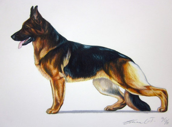 german shepherd standard german shepherd dog archival quality fine art print akc 5231