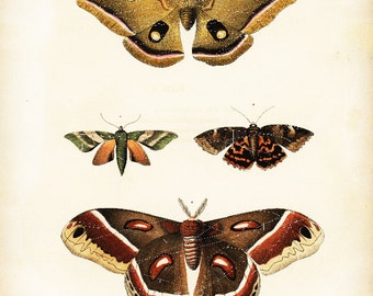 Original Antique Natural History Hand Colored  Butterflies And Moths    New York Encyolopedia 1840's