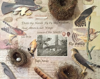 shadowbox assemblage using nests,feathers,verses made to order