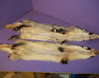 1 real animal tanned badger skin pelt hide fur pule rug taxidermy leather foot claw paw legs man cave