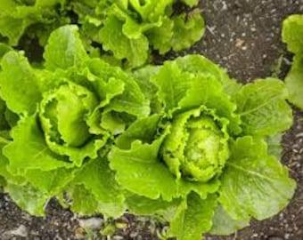 Crisp Mint Lettuce seeds, Heirloom Lettuce seeds