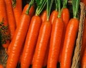 100 - Heirloom Carrot Seeds - Little Finger - Heirloom Vegetable Seeds, Heirloom Midget Carrot Seed, Non-gmo Carrot Seed, Little Finger Seed