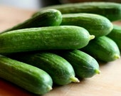 75 - Heirloom Cucumber Seeds - Spacemaster 80 - Heirloom Bush Cucumbers, Spacemaster Cucumber Seeds, Non-gmo Cucumber Seed, Spacemaster Seed