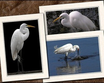 3 Egret Photo Note Card Set - Egret Note Cards - 5x7 Egret Card - Blank Bird Note Cards - Egret Photo Greeting Cards Handmade (BD1)