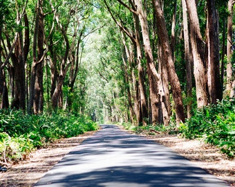 Road through Green Woods Photography, Mud Lane in Hawaii