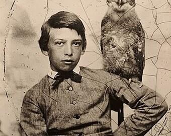 1861: 12-year- Abbott Handerson Thayer with an owl (Artist)- Photo Print