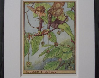 Original c1940 The Flower Fairies of the Trees Cicely Mary Barker