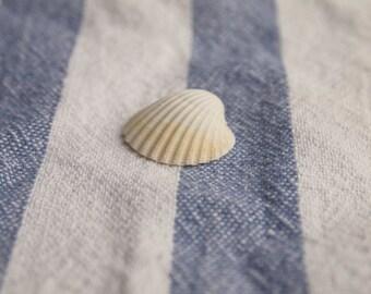 """Seashell photography """"Shell 2"""", nautical still life photography, seashells, retro photography, nautical decor, beach decor, close-up, sea"""