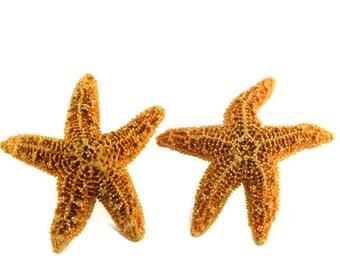Real Starfish Earrings