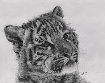 Tiger Cub - Canvas Print