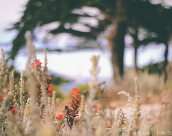 Flowers of Lincoln Park San Francisco Photograph
