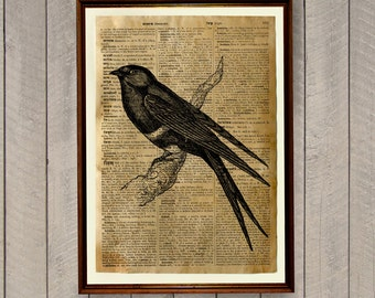 Swallow print Bird poster Dictionary page Animal decor WA293