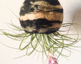 Hand Felted Hanging Terrarium with Tillandsia Air Plant (Natural Eco Friendly)