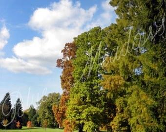 Fall photography, colorfull landscape, fall trees, pond, fall scene, landscape, blue sky, autumn, autumn landscape,nature photography