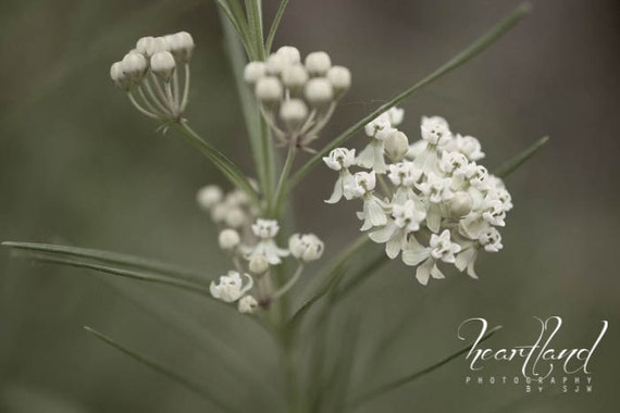 Nature Photography, Gray Colors, Flower Photo, Macro Flower Art, Grey and Green, Iowa Photography, Midwest Art, Serene Photo, Calm Nature